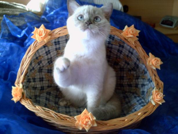 sterben katzen wenn man sie nicht entwurmt
